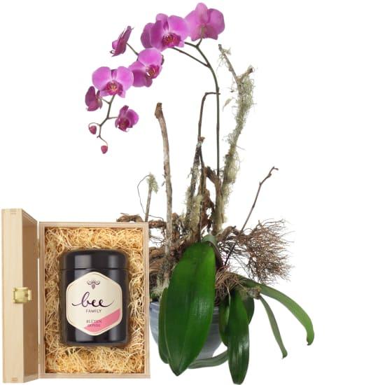 Edle Orchidee (Pflanze) mit Schweizer Blütenhonig