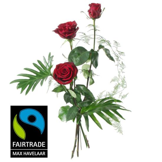 3 rote Fairtrade Max Havelaar-Rosen, mittellang mit Grün