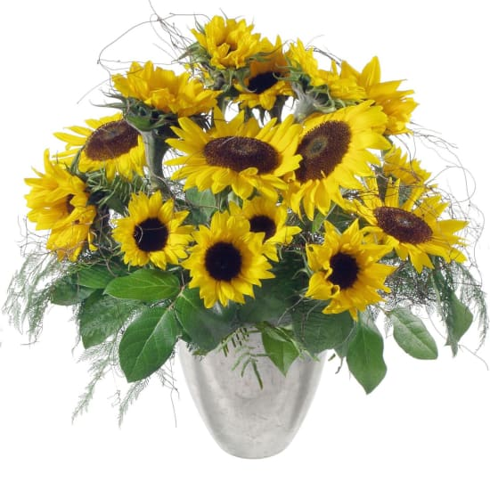 Sunflowers Pure
