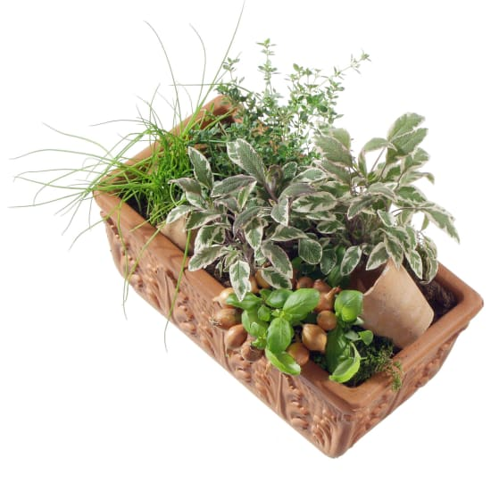 Herb Box (planted)