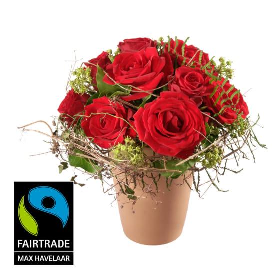In love ... mit kleinblütigen Fairtrade Max Havelaar-Rosen