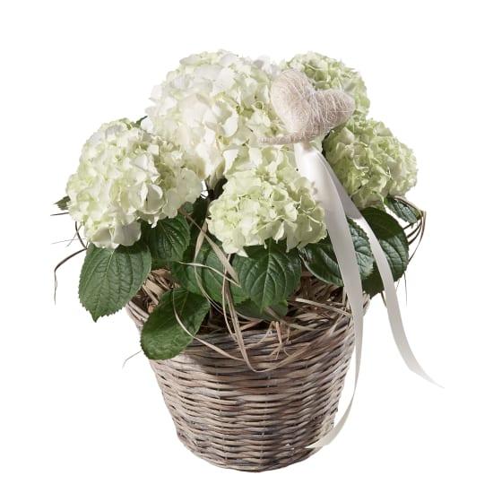 Hydrangea (white) with Heart