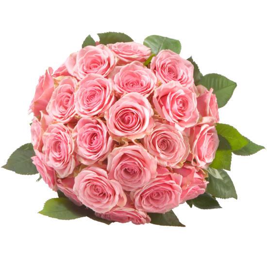 Rosenperle in Rosa