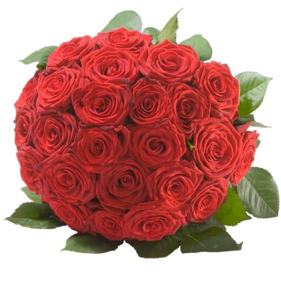Rosenperle in Rot