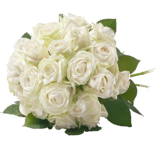 La perle de roses blanches