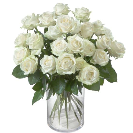 24 weisse Rosen