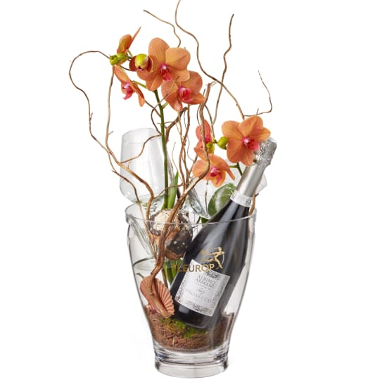 "A Touch of Exotic: Prosecco Albino Armani DOC (75 cl), incl. ice bucket and two ""Connaisseur"" glasses"