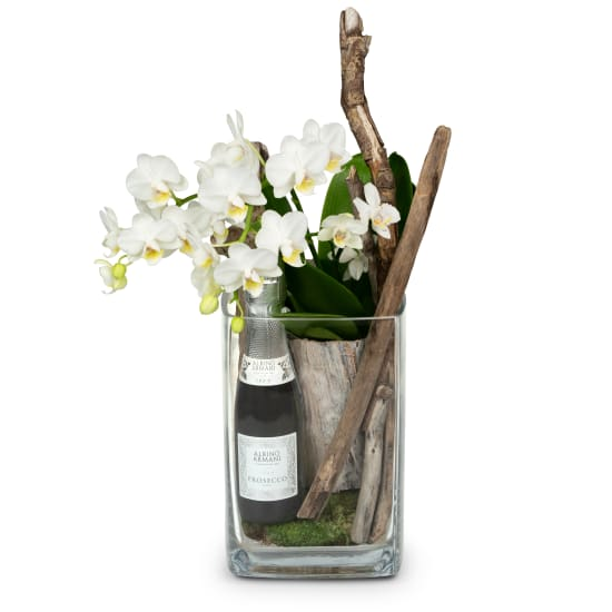 Natural and Exquisite (orchid plant) with Prosecco Albino Armani DOC (20 cl)
