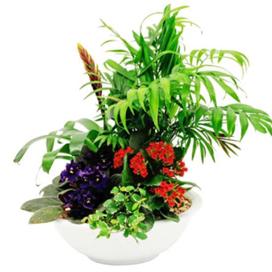 Pflanzenmix in Schale