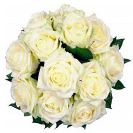 12 Weiße Rosen