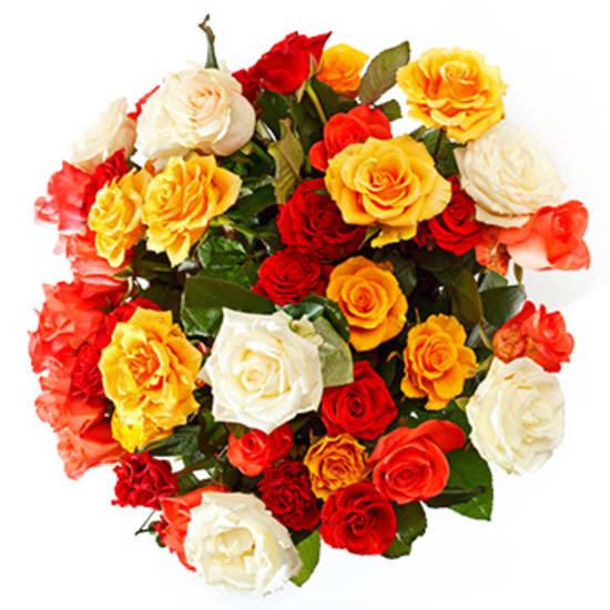 12 Rosen in Ihrer Wunschfarbe