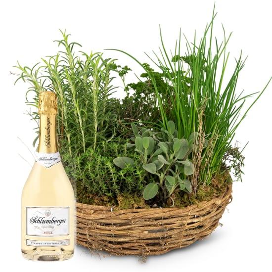 Little herb garden (planted) with Schlumberger Sparkling brut, 0,75 L