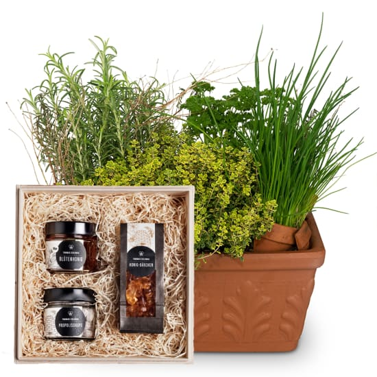 "Herb Box (planted) with honeybox ""Sweet temptation"""