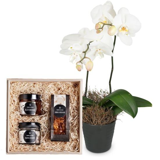 "White Orchid (Phalaenopsis) with honeybox ""Sweet temptation"""