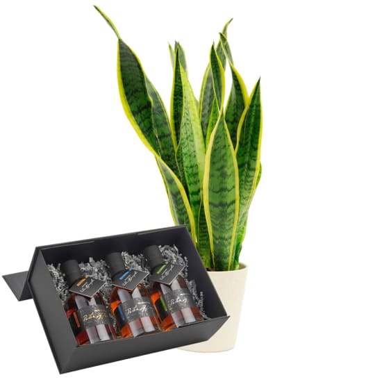 """Sansevieria with """"Giftbox Fine Austrian Whisky"""" from Peter Affenzeller"""