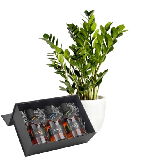 "Zamioculcas with ""Giftbox Fine Austrian Whisky"" from Peter Affenzeller"