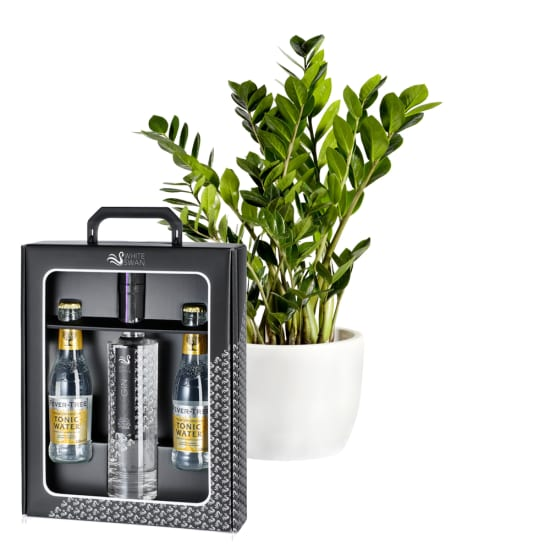 """Zamioculcas with """"White Swan Gin Gift Box"""" from Peter Affenzeller"""