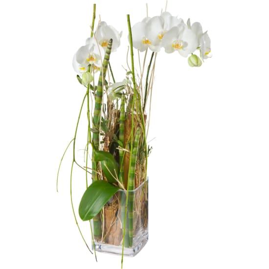 Zauberei (Orchideenpflanze inkl. Vase)