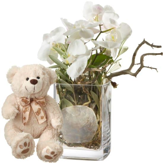 Design orchidea, vaso incluso con orsetto in peluche (bianco)