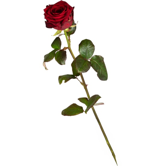 1 rose rouge (tige longue)