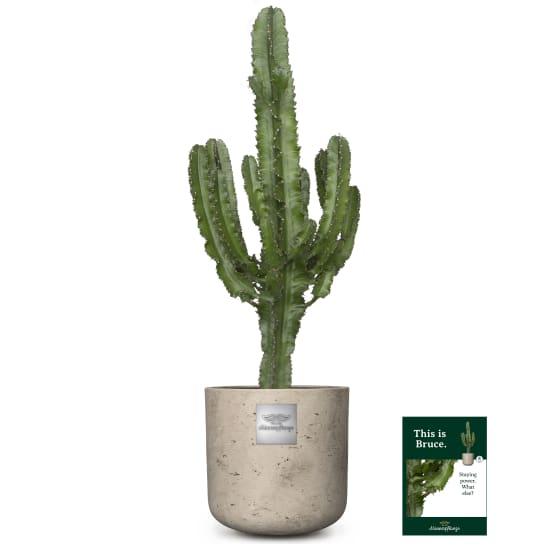 Das ist Bruce (Euphorbia)