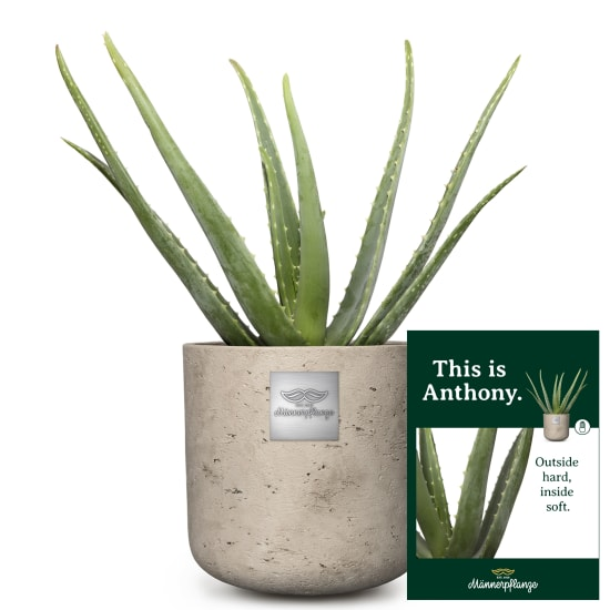 This is Anthony (Aloe vera)