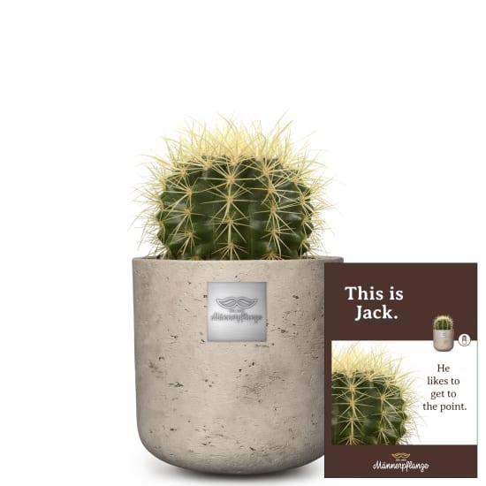 This is Jack (Echinocactus grusonii)