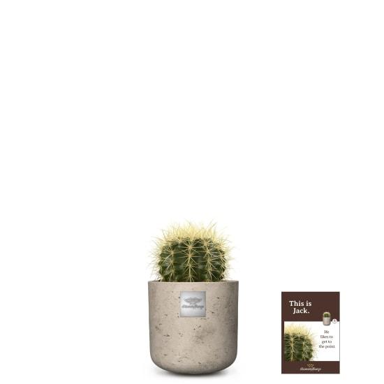 Voici Jack (Echinocactus grusonii)