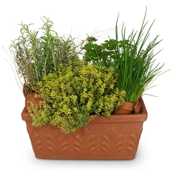Herb Box (planted)