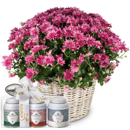 Chrysanthème (rose) en panier avec coffret cadeau de thés Gottlieber