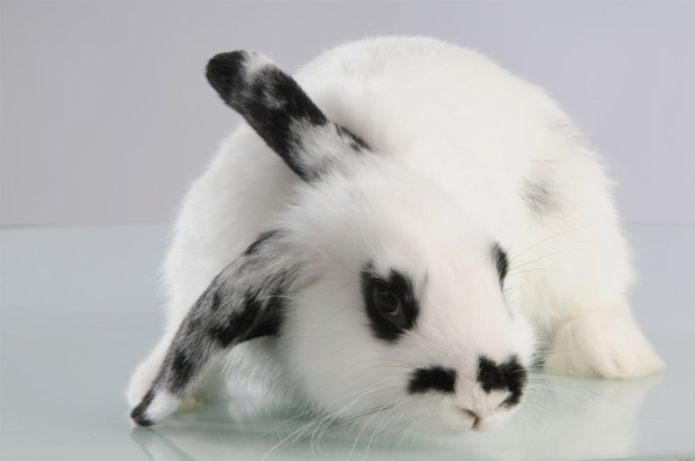 MC - Miska dla królika 13cm, Petware Cane
