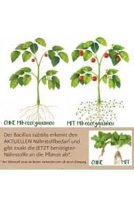 Mikrooganismen für Rosen und Zierpflanzen