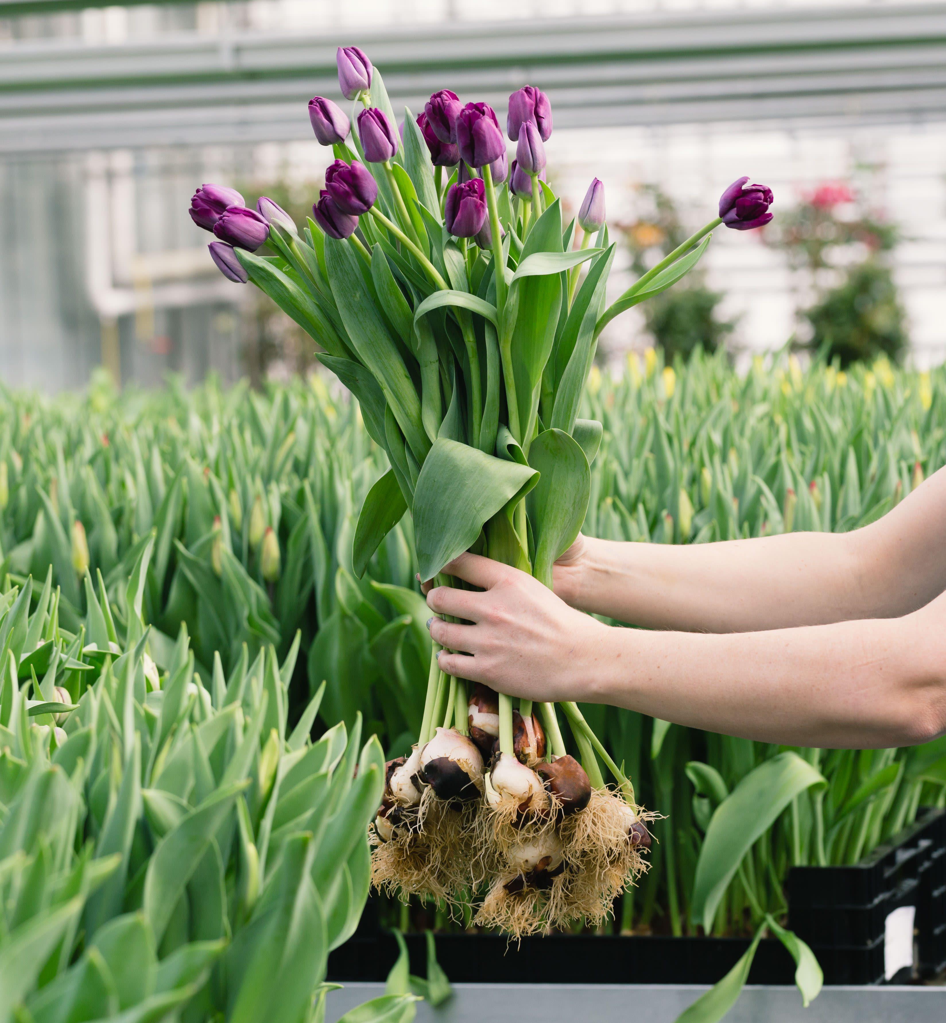 Flowerli –Nachhaltigkeit