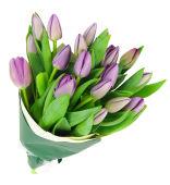 Mauve Tulip Bunch