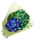 Blue Orchid Bunch