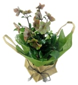 Winter Rose In Hessian Bag