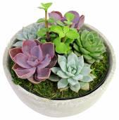 Urban Desert Succulent Garden