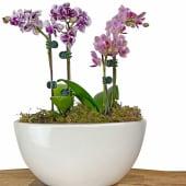 Oh My Mini Orchids