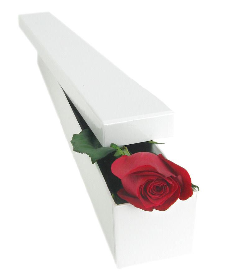 Single Elegant Rose