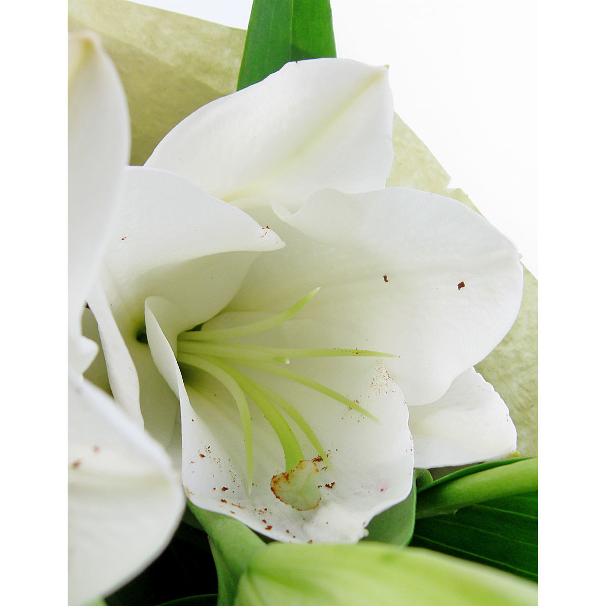 White Lily Bunch