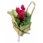 Pink Cyclamen In Hessian Bag