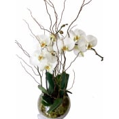 Orchid Fishbowl - Be Bold