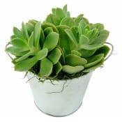 Desert Life Succulent