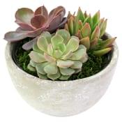 Succulent Garden - Little Lush