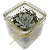 Nestled Succulent Plant
