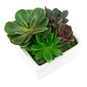 Succulent Garden - Lush Patch