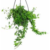 Splash Of Green Ivy