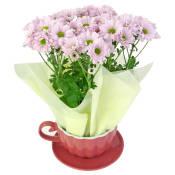 Chrysanthemum Tea Cup - Pink