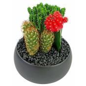 Cacti - Ceramic Pot
