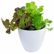 Loveliest Lettuce Garden